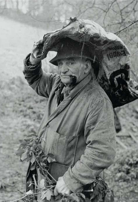 Archie Parkhouse with ivy for sheep, Milhams, Dolton, Devon, 1975 by James Ravilious © Beaford Arts
